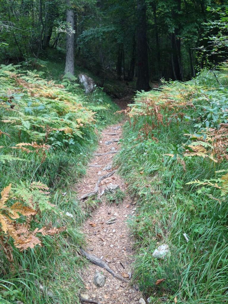 Sentiero dopo il Pian del Mugon