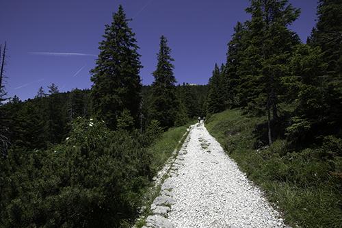 Stradina per il bosco di Varagno